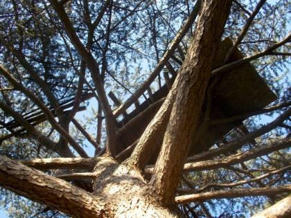 Roma, spuntano le baracche persino sugli alberi