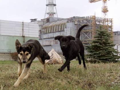 A Chernobyl animali e piante stanno bene: cosa vuol dire tutto questo?