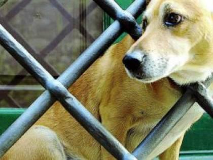 Polpette avvelenate a Trani: cani e gatti in pericolo