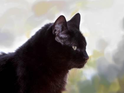 Viareggio, il comune sfratta i gatti dall'asilo: l'ira degli animalisti