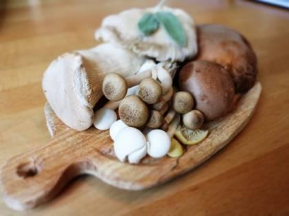 I benefici preziosi dei funghi sulla nostra salute