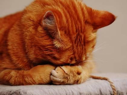 I gatti elisir per il cuore e l'umore