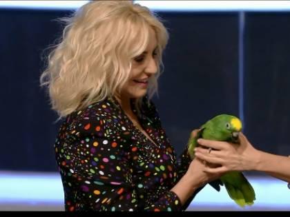Portobello, polemiche sul pappagallo del programma di Antonella Clerici
