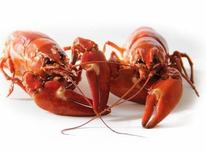 """L'Ue """"taglia"""" pure il pesce: rischio di rincari a tavola"""