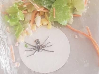 Trova ragno nell'insalata: foto choc diventa virale