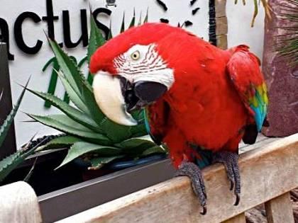 Ventimiglia: ladri non trovano soldi e rubano pappagallo per dispetto