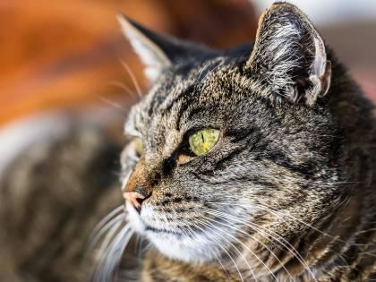 Paga una casa per i suoi gatti: 1.500 dollari al mese