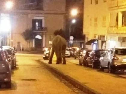 Elefante scappa dal circo e va a spasso per il centro
