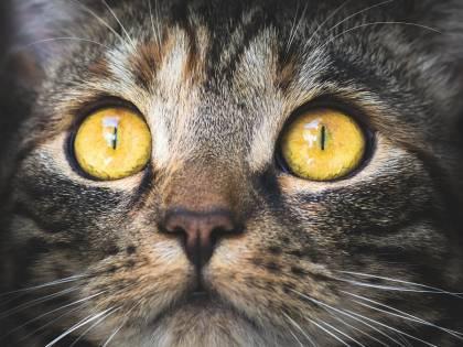 I gatti e il loro modo di vedere il mondo