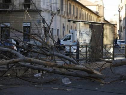 Cade albero a Roma, due feriti gravi