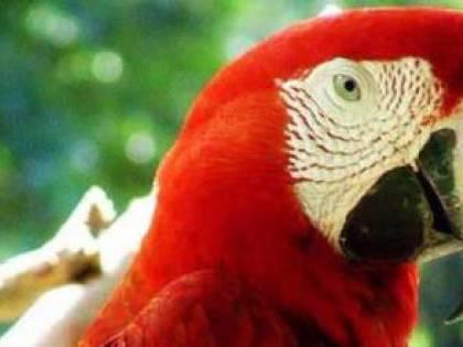 Il pappagallo della vicina lo insulta. E lui ammazza la padrona