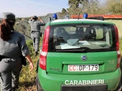 Traffico internazionale di animali, Napoli crocevia strategico per la criminalità
