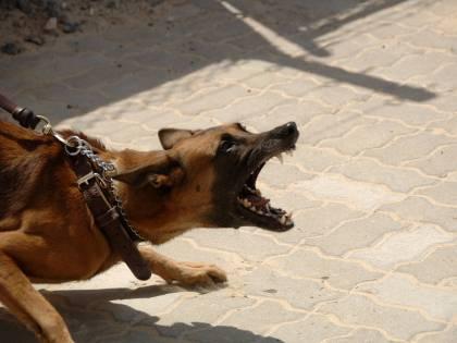 Le stupra e le dà in pasto ai cani, condannato a 23 anni