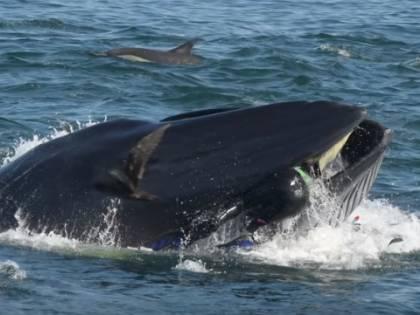 """Quei liberali nella """"pancia"""" della balena"""