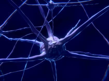 Il cervello umano generatore di neuroni a 90 anni