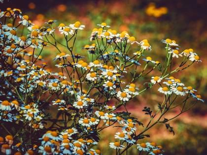 Gli analgesici naturali: cosa sono e come agiscono