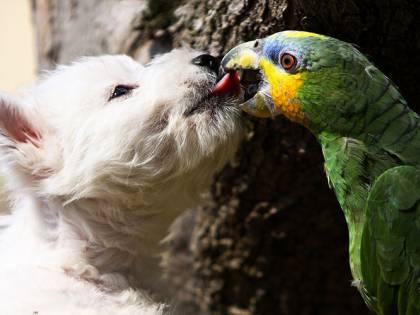 Lascia in auto per ore sei cani e un pappagallo. Denunciata una donna