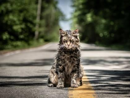 """Un nuovo """"Pet Sematary"""" al cinema, sempre dal libro di King"""