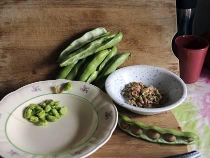 Fave fresche: fonte preziosa di fibre e vitamine