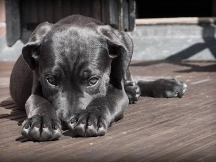 Ora è vietato lasciare il cane sul balcone: c'è multa da 500 euro