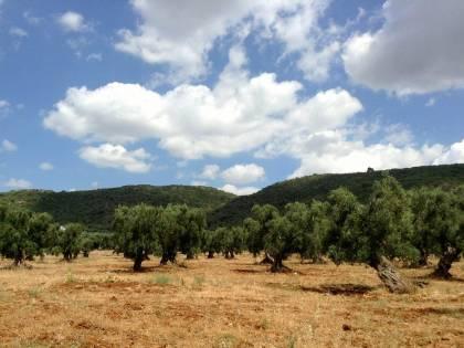 Colpo basso all'olio italiano: è di nuovo tunisino il segretario dell'organo di controllo