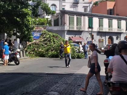 Paura a Napoli, albero crolla in strada: ferito ragazzo