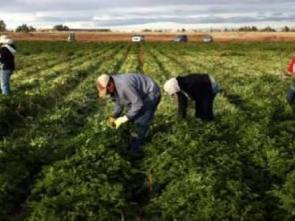 Brindisi, falsi braccianti agricoli: la maxi truffa all'Inps