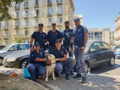 Labrador abbandonato in auto sotto al sole, salvati dagli agenti