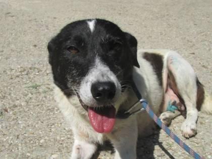 Animali abbandonati: due cani salvati grazie alla task force dei vigili urbani