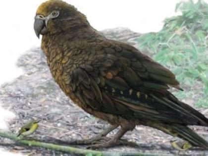 Trovati resti di un pappagallo gigante vissuto 20 mln di anni fa