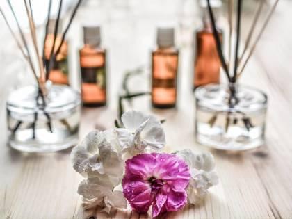Olio di neem contro le zanzare: tutte le sue applicazioni