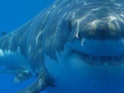 L'attacco dello squalo. Ma per lui finisce davvero male