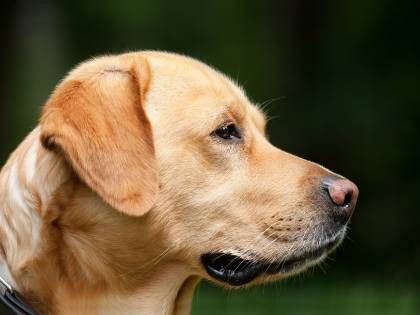 Padrone si sente male in auto e il cane cerca di salvarlo