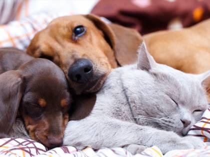 Pets in the City e Pet Week, a Milano due eventi per chi ama gli animali da compagnia