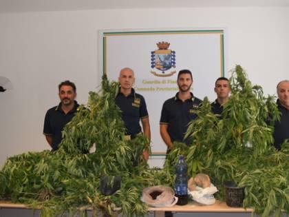 Caltanissetta, scoperta dalle Fiamme Gialle una vasta piantagione di cannabis