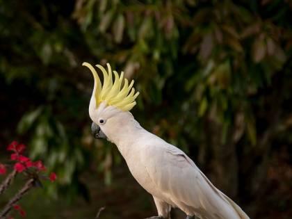 Spavaldo, il pappagallo sopravvissuto a 5 proiettili
