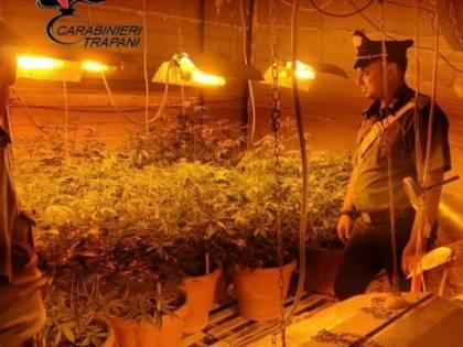 Scoperta una piantagione indoor, arrestato 41enne di Alcamo
