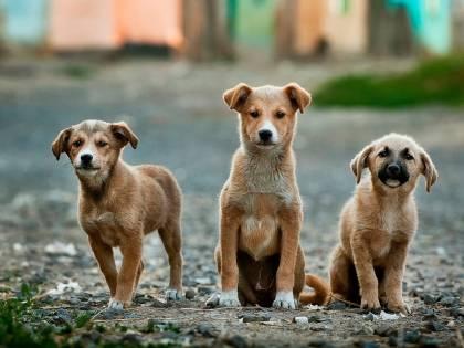 Cina, la carne di cane sostituisce quella suina