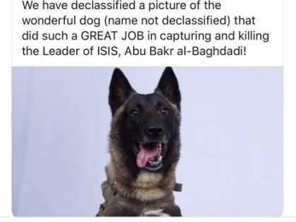 """Ecco il cane """"eroe"""" nel raid per catturare Baghdadi"""