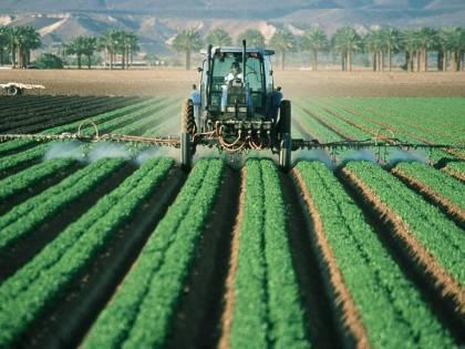 """Gli imprenditori agricoli: """"La sanatoria degli irregolari? Servono operai specializzati, non braccianti"""""""