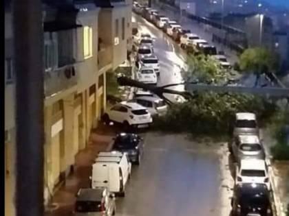 Maltempo, un albero si abbatte tra le macchine ad Agrigento