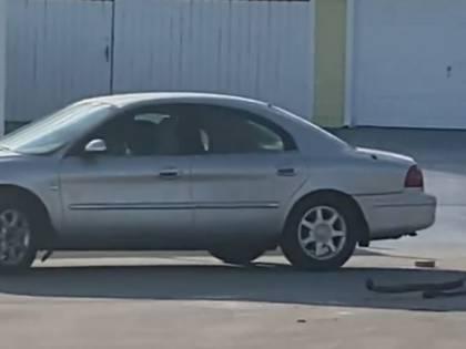 """Florida, incredibile ma vero: cane """"guida"""" per un'ora un'auto in retromarcia"""