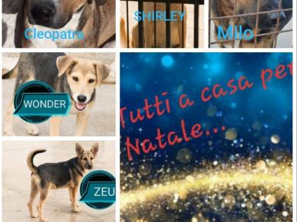 Vieste, i cani dati in adozione davanti alle chiese