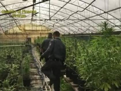 La marijuana della 'ndrangheta in un vivaio di Pistoia: sei arresti