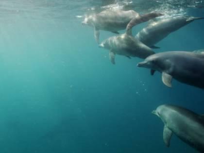 Bambina di 10 anni attaccata dai delfini e trascinata sott'acqua