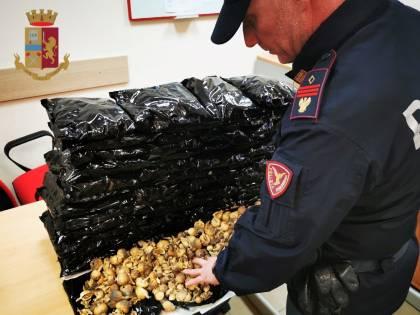 Trasportava sei chili di papavero da oppio: arrestato corriere della droga indiano