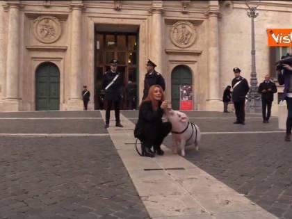 Brambilla porta un maiale al guinzaglio a Montecitorio