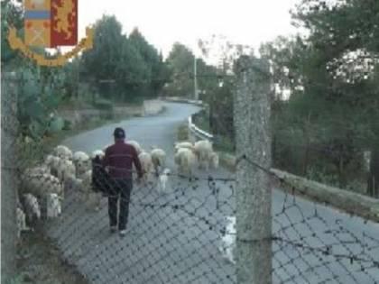 Timbravano il cartellino e portavano le pecore al pascolo