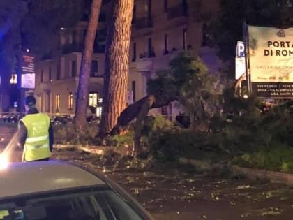 Roma, albero cade e colpisce auto: automobilista ferita