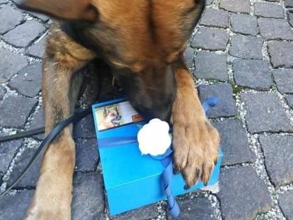 Cane poliziotto dà l'ultimo saluto al collega a quattro zampe